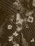 FlowerArranging_MiyokoYasumoto_05-793x1024 (1)