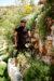 In_the_Vinyards_of_Lebanon_01-1600x2405